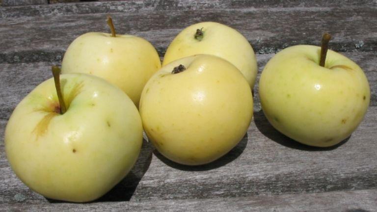 YellowTransparent(group)