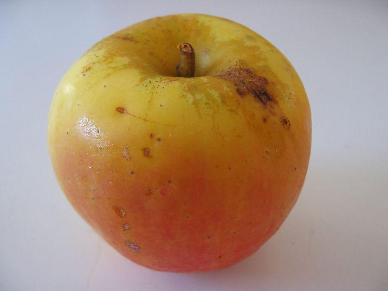 orange+sweet+fruit