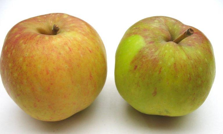 pewaukee+2+fruit