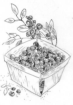 Blueberries in quart basket, illustration.