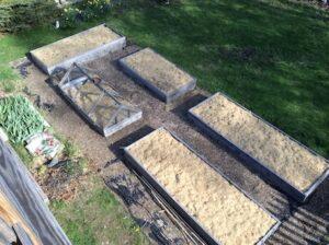 Raised bed garden with mulch