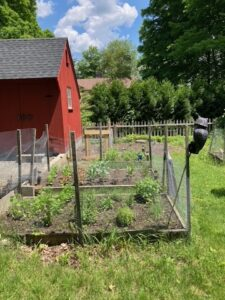 raised bed garden with mesh fence