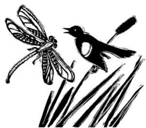 illustration of dragonfly and blackbird