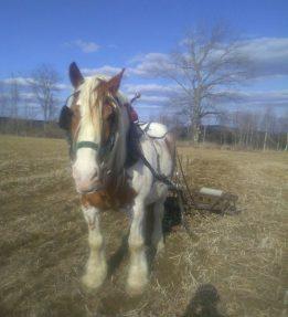 Helios Horsepower Farm 102 KB